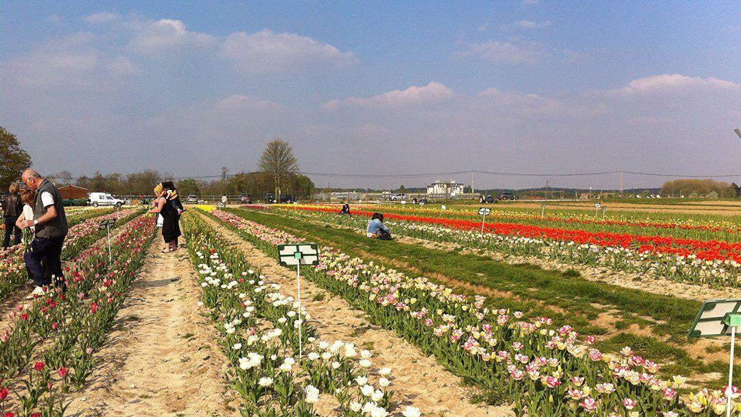 Cueillette de fleurs à la ferme Viltain